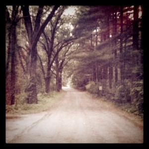 Road of Trees